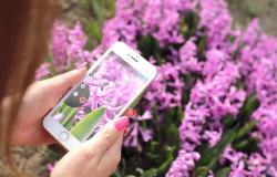 Ferienwohnungen mit gratis Wifi am Gardasee für Social Media liebende Gäste