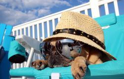 Urlaub am Gardasee mit Hund